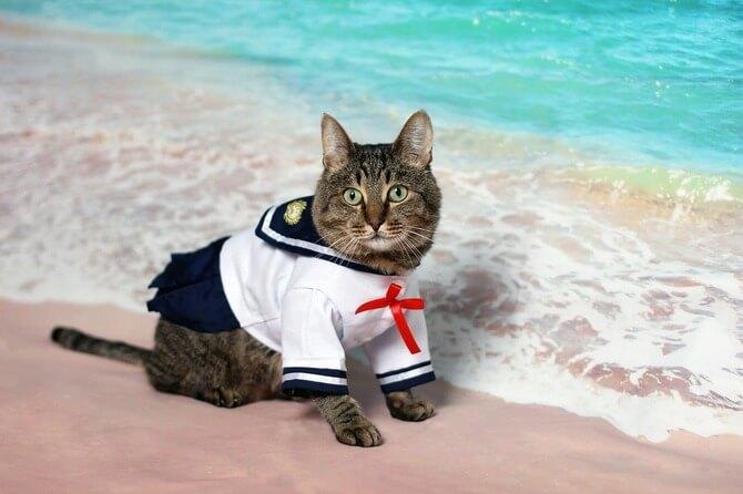 セーラー服を着た猫