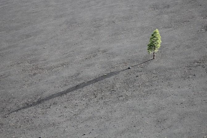 砂漠に生えた1本の小さな木