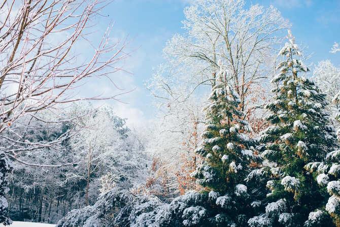 雪の積もった木々